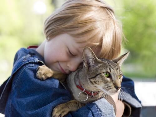 5 lecciones que los niños pueden aprender de los gatos