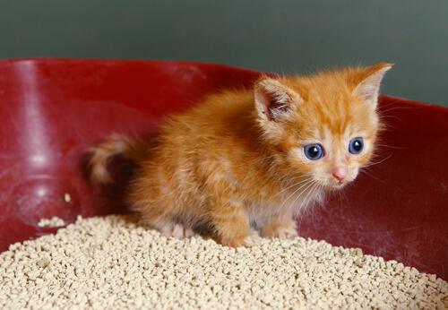 7trucos para que la arena de los gatos no huela