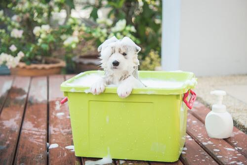 champu más adecuado para perros