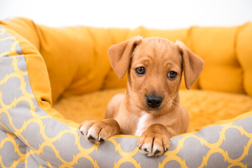 Peligros de comprar un perro a un particular