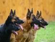 cuantos perros hay en el mundo