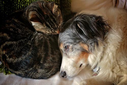 3 pasos para curar una quemadura en perro o gato