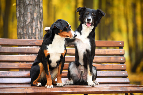 Dogs sitting on a bench