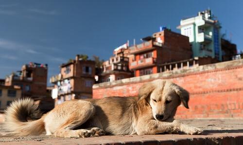 el perro y la contaminacion