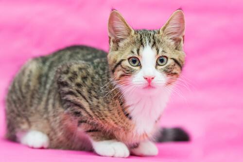 esterilizar a una gata