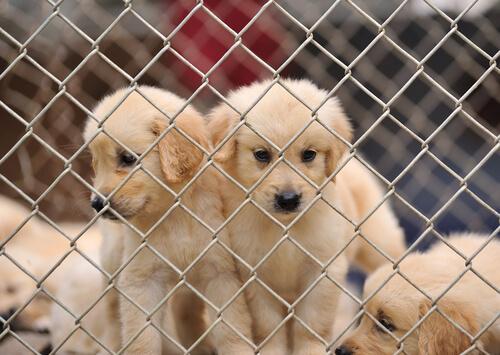 No a las fábricas de cachorros
