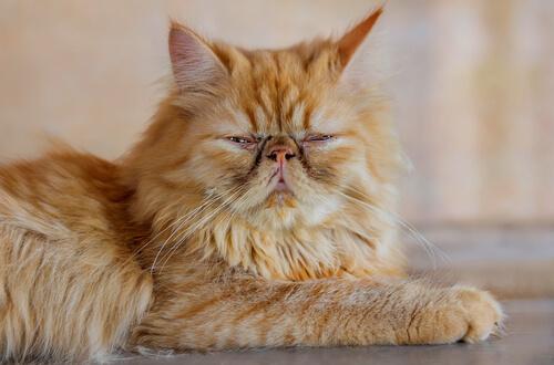 5 cuidados para gatos mayores