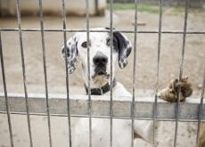maltrato animal en internet