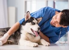miedo al veterinario
