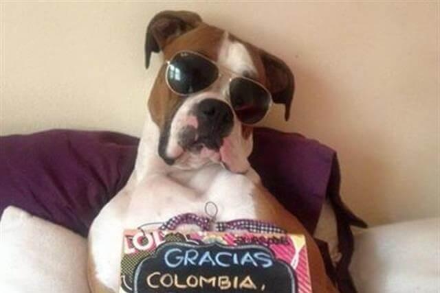 Óscar, el perro que revolucionó Internet