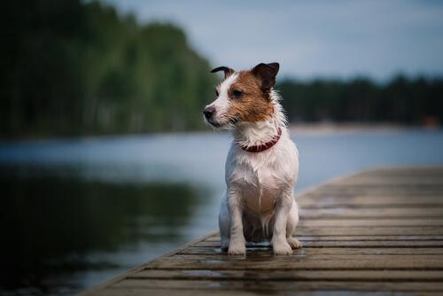 Muere Pancho, el perro más famoso de la televisión española