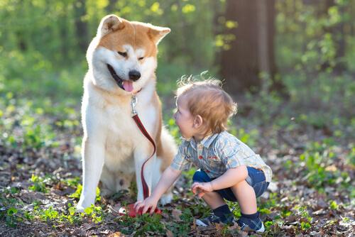 perro cambia la vida de un niño
