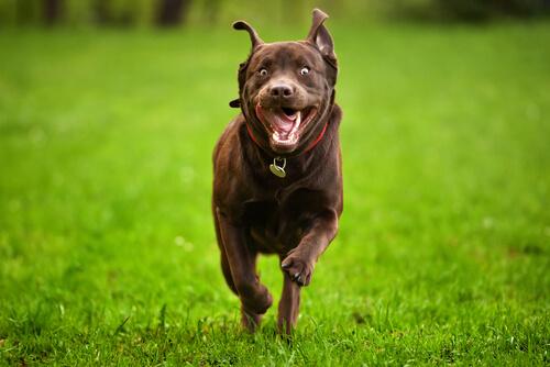 5 consejos para controlar a un perro hiperactivo
