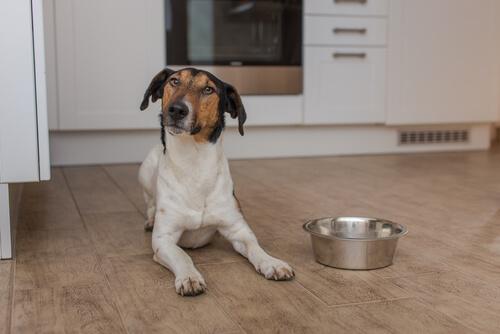 perro no para de pensar en comer