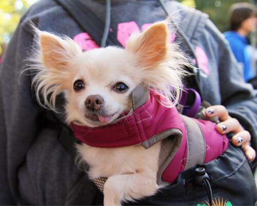 perros adoptados en el extranjero