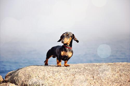 5 cuidados para perros de raza pequeña