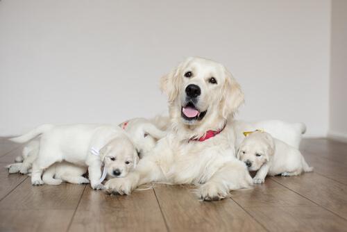5 consejos para el posparto de una perra