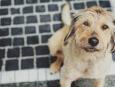 prevenir la gripe en los perros