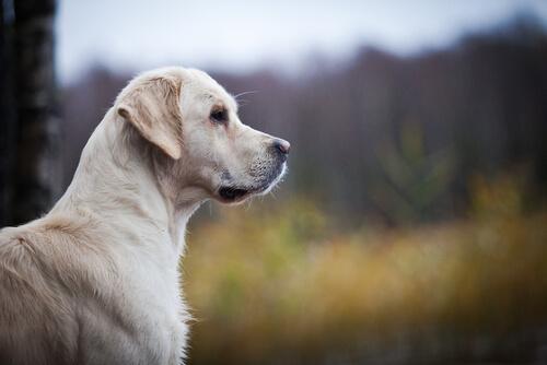 Como reconocer los problemas de corazón del perro en casa