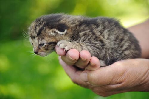 ¿Cómo mejorar las leyes de la protección animal en España?