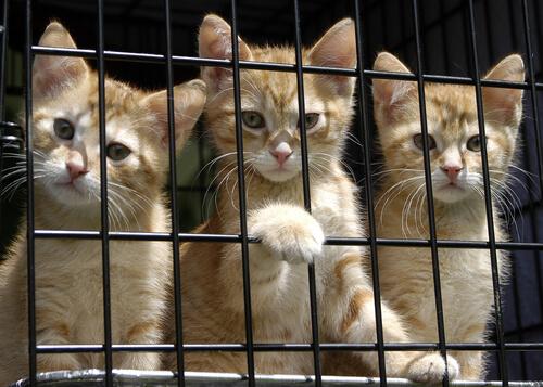 regalos solidarios para gatos abandonados