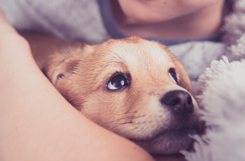 Primeros auxilios para cachorros: respiración asistida