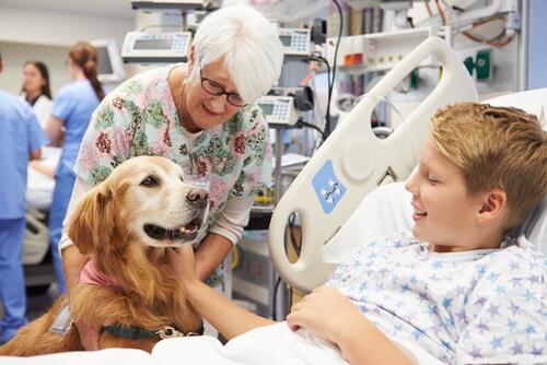 terapia de perros con niños hospitalizados
