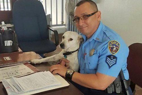 Un perro callejero entra en la comisaría y se hace policía