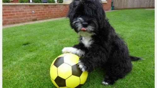 Ronaldog, el perro futbolista