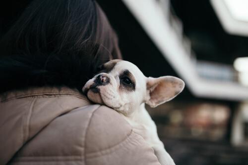 adoptar un nuevo perro