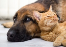 argentina pais con mas mascotas