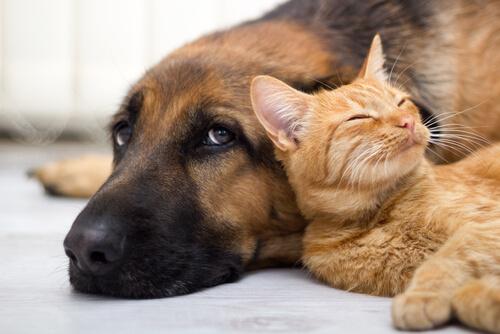 Argentina, el país con más mascotas por habitante