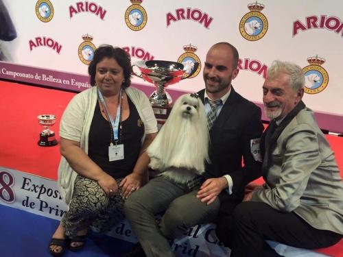 Un bichón maltés, ganador del concurso a mejor perro de España