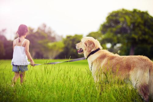 Qué hacer cuando un niño pide una mascota
