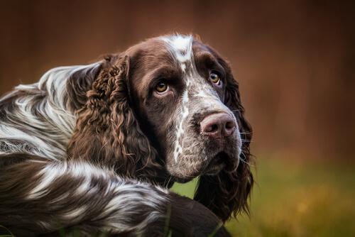 Cómo calmar el hipo a tu perro