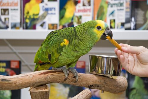 Cómo evitar un engaño en las tiendas de animales