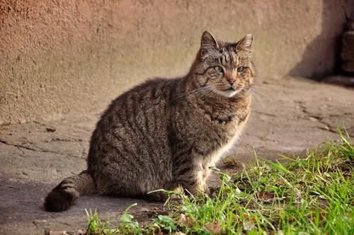 gato con diarrea