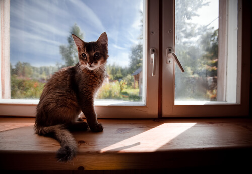 gato en la ventana de su hogar