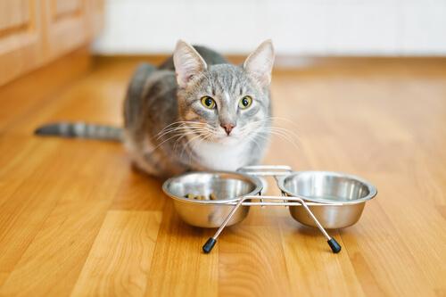 gatto e ciotole