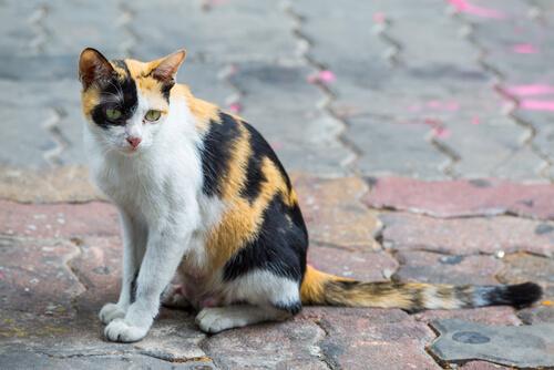 Un perro o un gato se abandonan cada 4 minutos