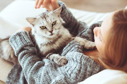 gatos y dueños