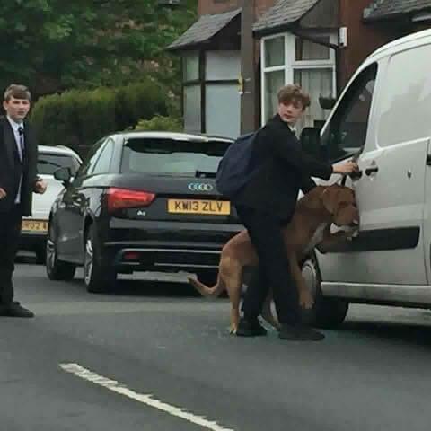 Bradley, el joven que salvó a un perro de morir ahogado por su propia correa