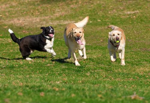 llevar el perro al parque