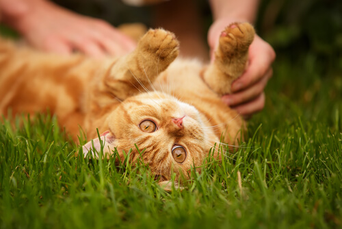 os gatos também podem ser amigos fieis