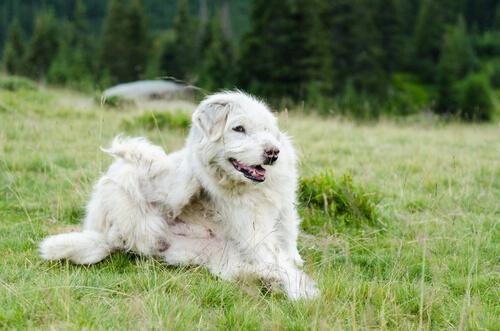Conoce los parásitos más comunes en perros
