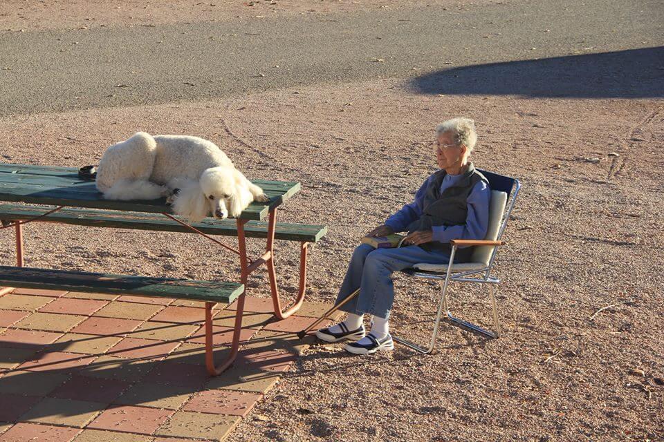 mujer de 90 años viaja con su perro 2