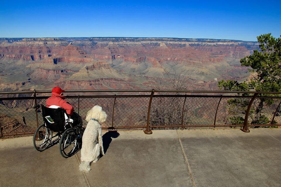 mujer de 90 años viaja con su perro 3