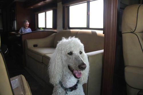 Mujer de 90 años viaja con su perro por los EE.UU.