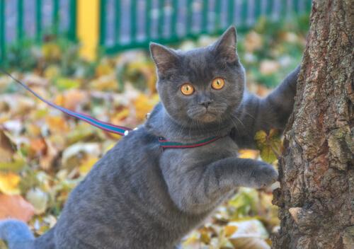 pasear a un gato con correa