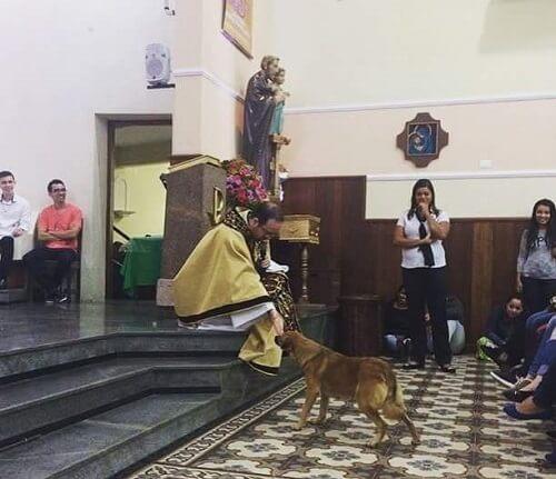 Un perro callejero entra en una iglesia y recibe la bendición del cura